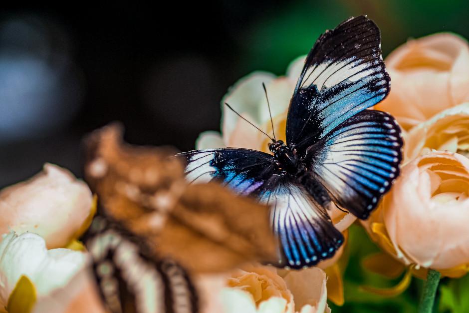 casa delle farfalle ad abano terme