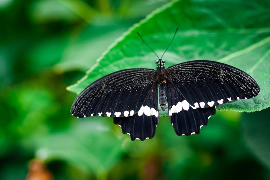 casa delle farfalle colli euganei