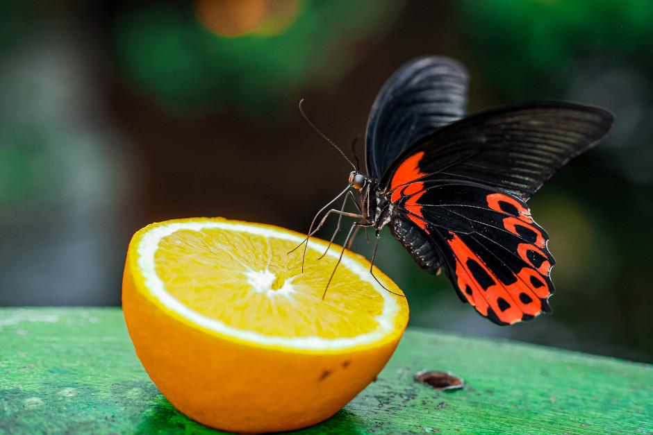 farfalla casa delle farfalle