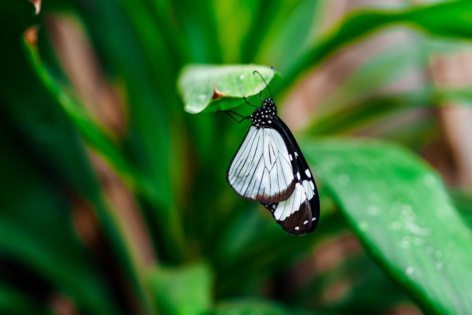 casa delle farfalle a padova
