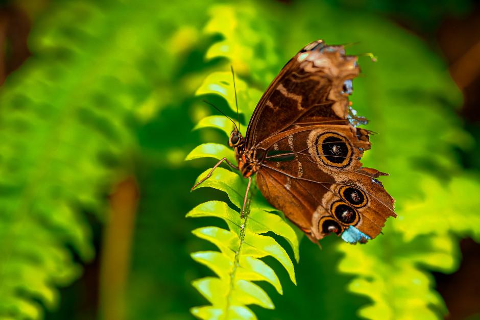 casa delle farfalle montegrotto terme