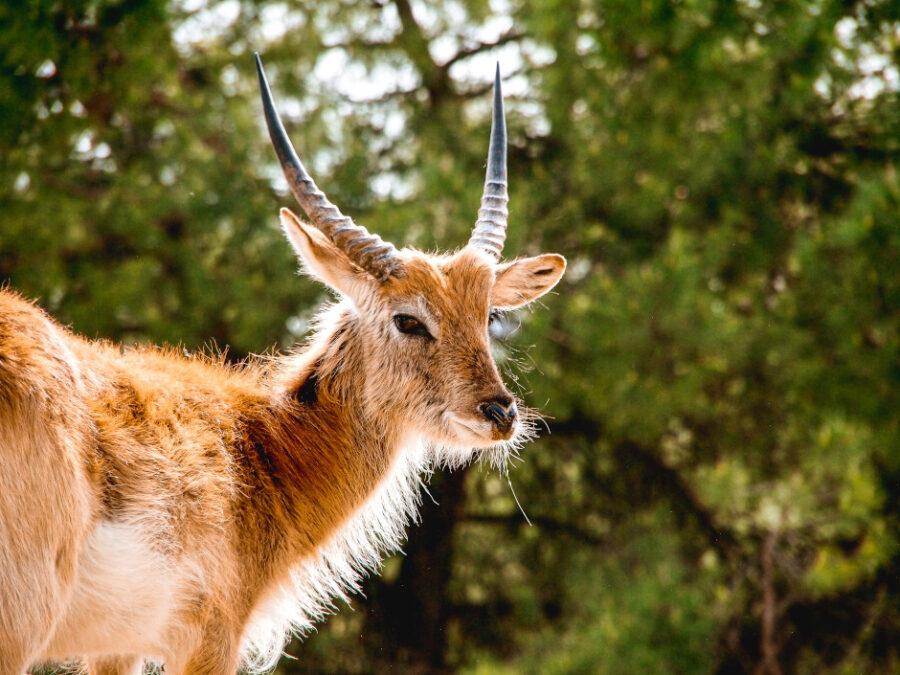 cosa fare in veneto zoo natura viva