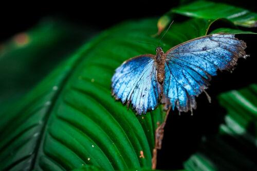 Butterfly Arc: la casa delle farfalle a Montegrotto Terme