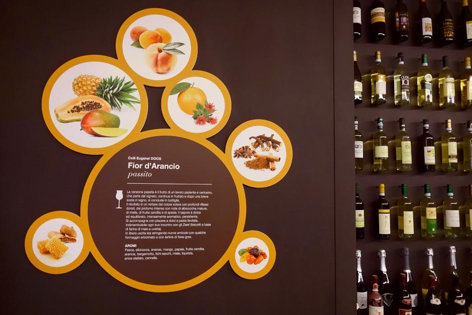 muvi museo del vino colli euganei