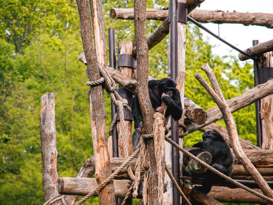 scimmie natura viva verona