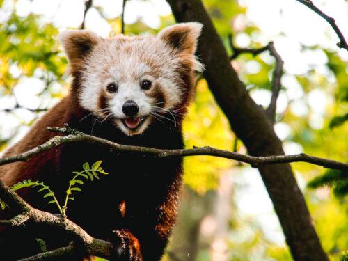 Parco Natura Viva: a tu per tu con gli animali