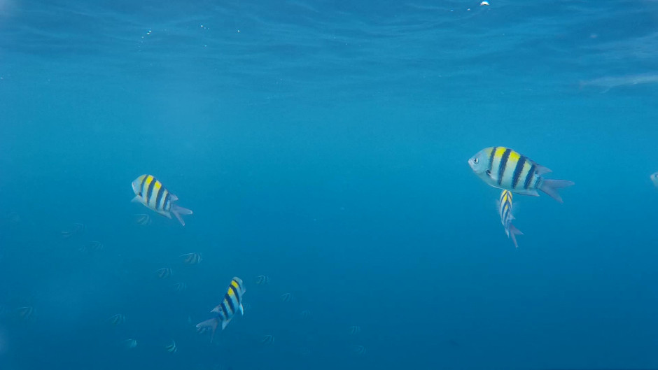 pesci maldive snorkeling