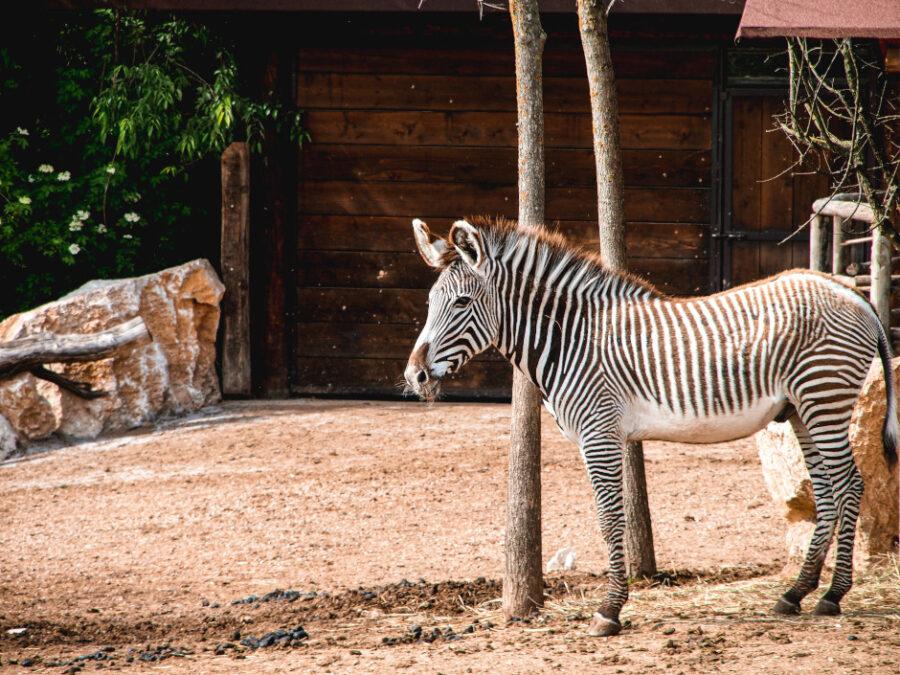 zona safari park verona
