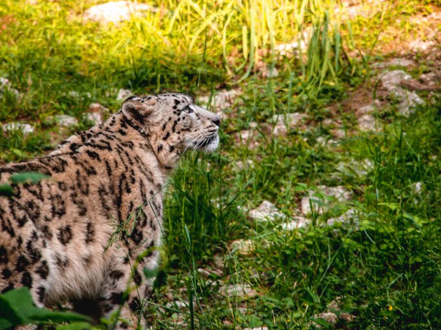 zoo bussolengo parco natura viva