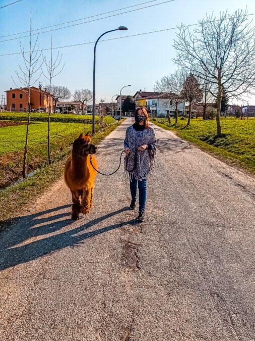 passeggiata con alpaca in veneto